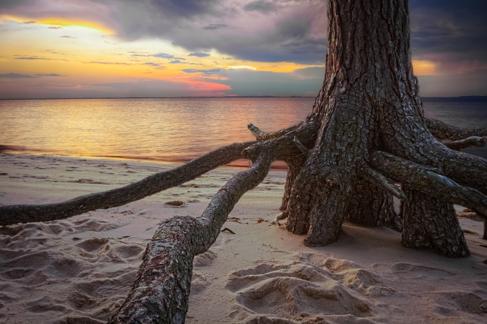 Roaring Point Roots2