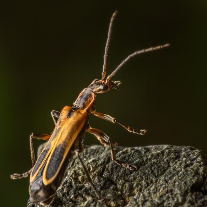 Light Bug 1